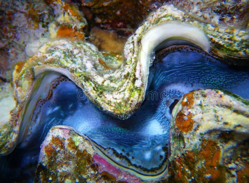 Het weekdier van de close-up onder water stock afbeeldingen