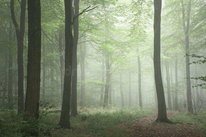 Het weelderige groene beeld van het het concepten mistige boslandschap van de fairytalegroei stock foto