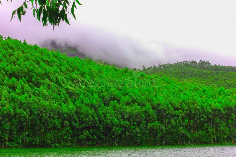 Het weelderige groene bos bij zon heft op stock foto's