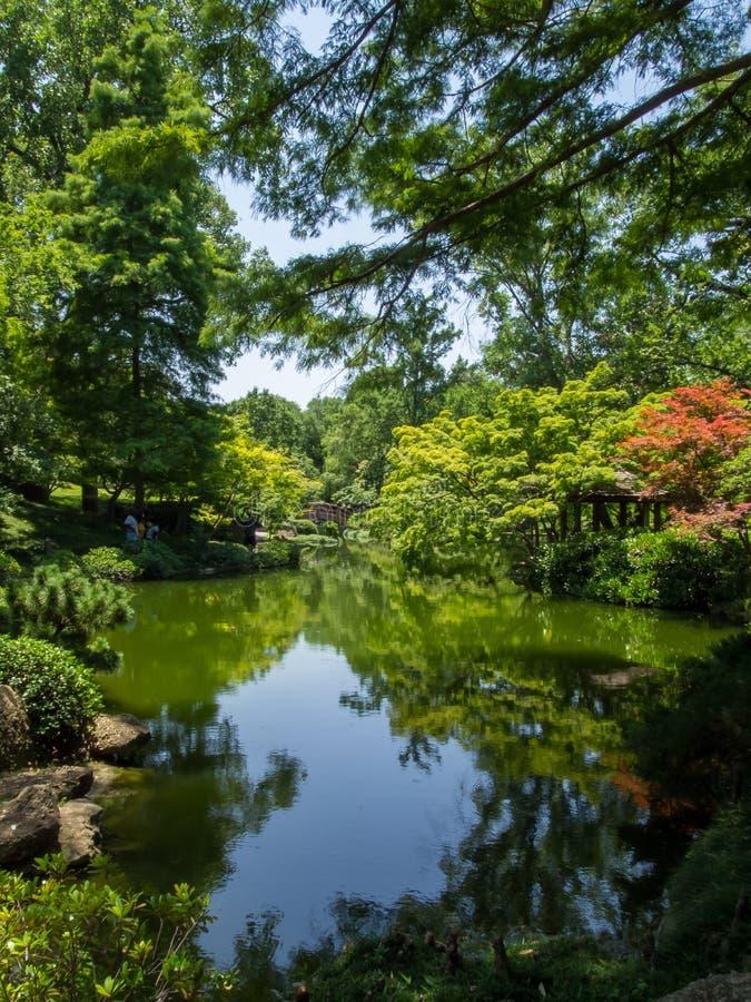 Het weelderige groene gebladerte omringt Vijver Japanse Tuinen Fort Worth Texas royalty-vrije stock afbeelding