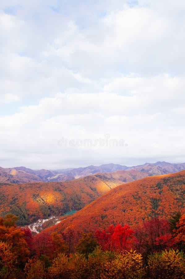 Het weelderige kleurrijke de herfstbos van Taebaek-Bergen, gangwon-, S stock foto's