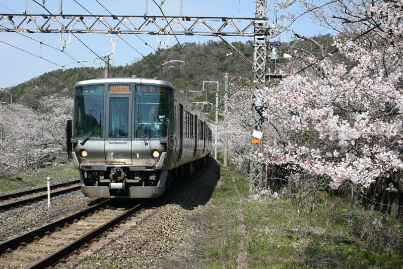 Het Weergeven van de lokale trein die van Wakayama op sporen reizen met bloeit stock afbeelding