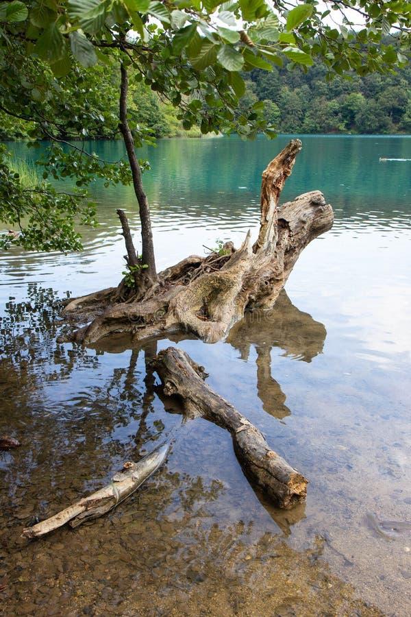 Het Weergeven van Nice van Plitvice-meren nationaal park royalty-vrije stock fotografie