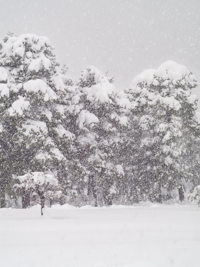 Het Weergeven van sneeuw behandelde berg Dirfys en hemel met wolken op een zonnige dag op het Eiland Evvoia, Griekenland stock fotografie