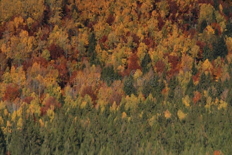 Het weerspiegelen van bomen in het meer van Heilige Anna stock fotografie