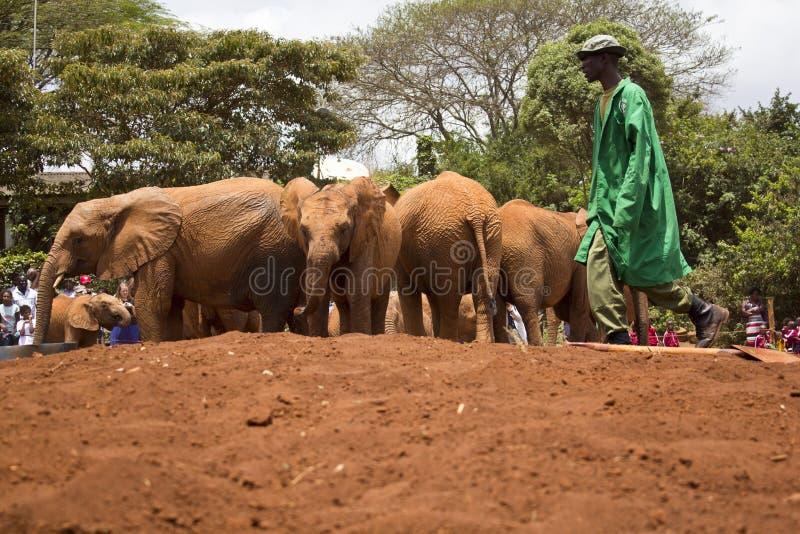 Het Weeshuis van de babyolifant royalty-vrije stock foto's