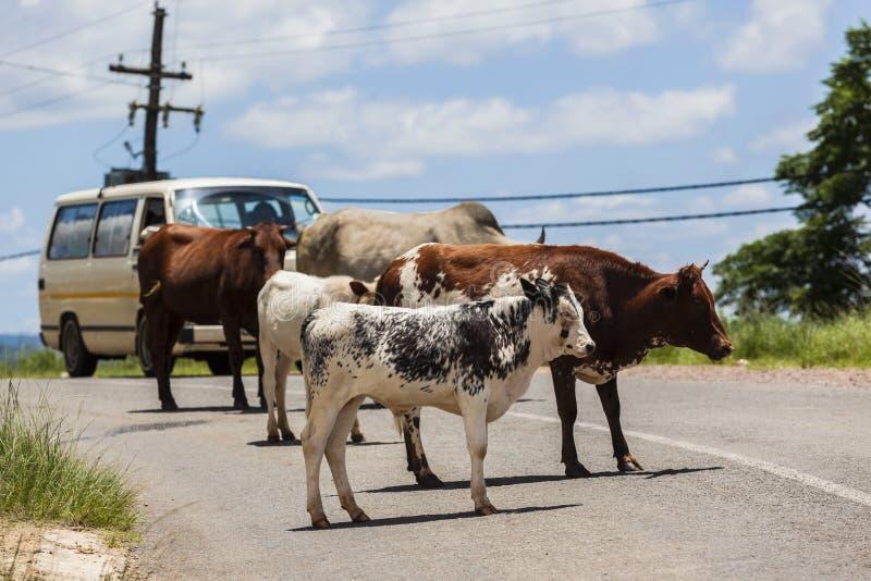 Het Wegvoertuig Afrika van het vee royalty-vrije stock afbeeldingen