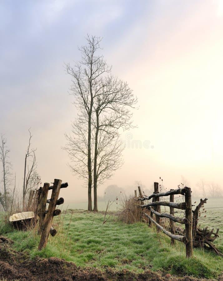 Het weiden bij dageraad stock foto