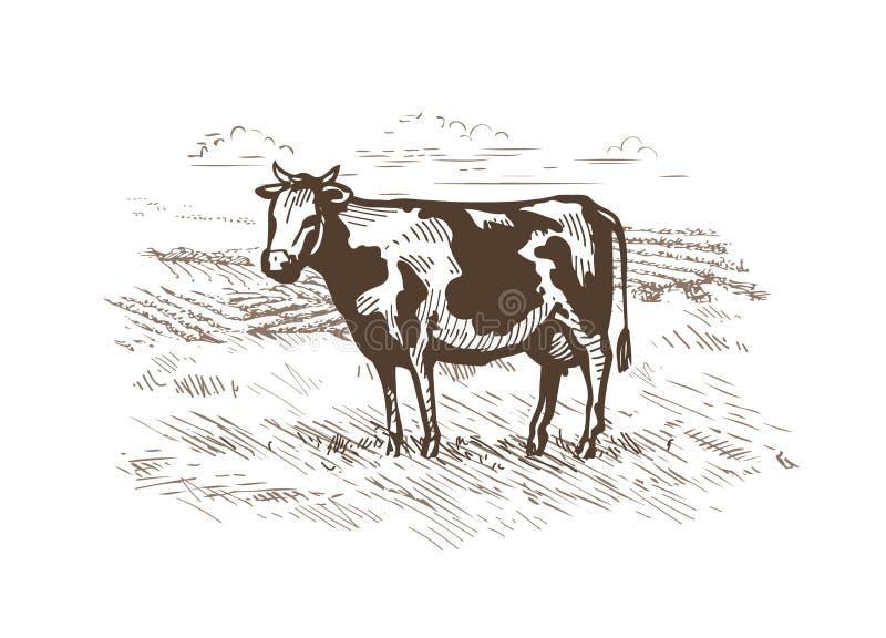 Het weiden van de koe in de weide Melk, rundvleesembleem of etiket Uitstekende schetsvector royalty-vrije illustratie