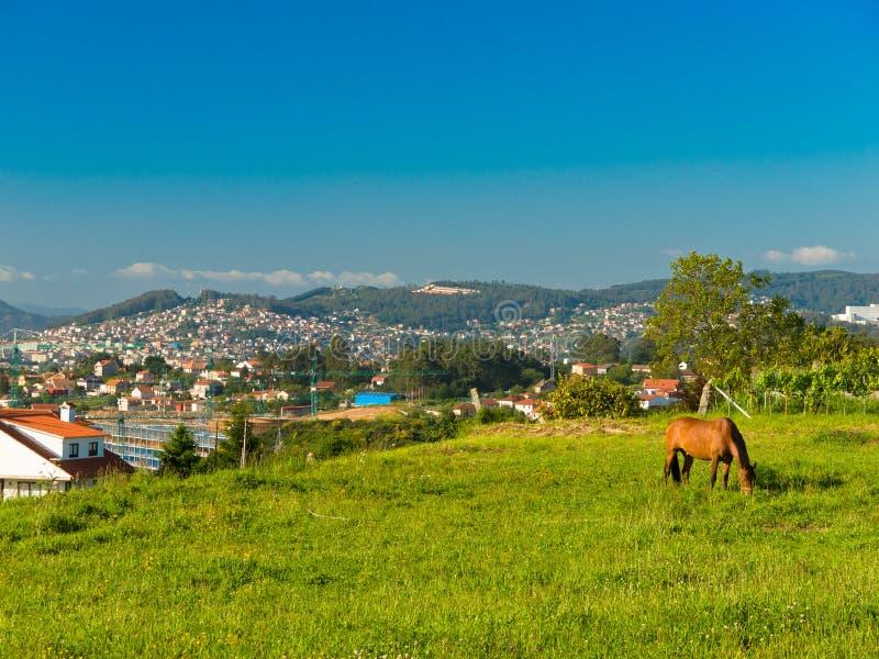 Het weiden van het paard dichtbij Vigo royalty-vrije stock afbeeldingen