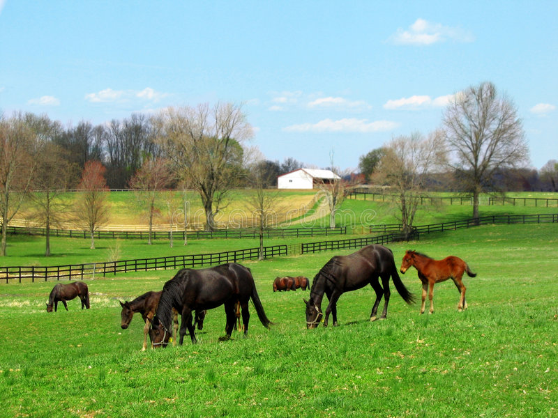 Het Weiden van paarden royalty-vrije stock foto