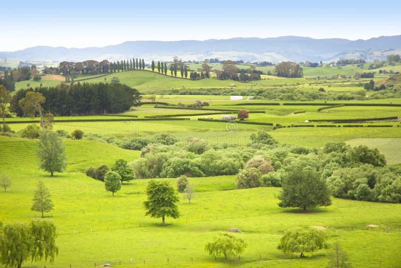 Het Weiland van het landbouwbedrijf in Nieuw Zeeland royalty-vrije stock afbeelding