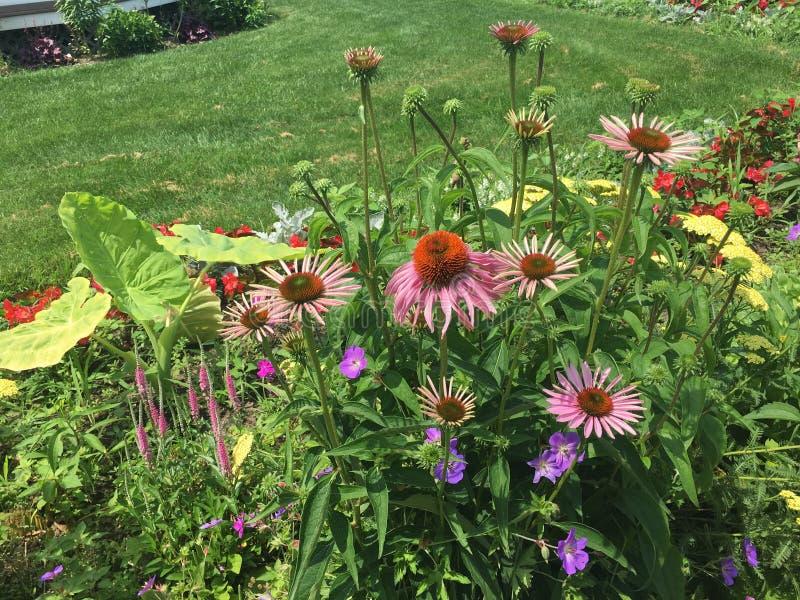 Het wekken onder bloemen royalty-vrije stock foto