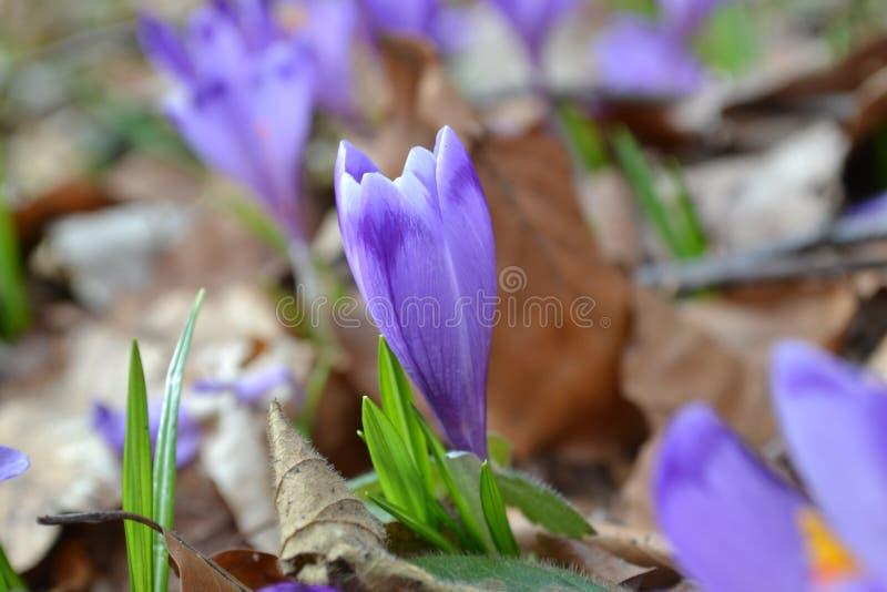 Download Het wekken van de lente stock afbeelding. Afbeelding bestaande uit nieuw - 114226317