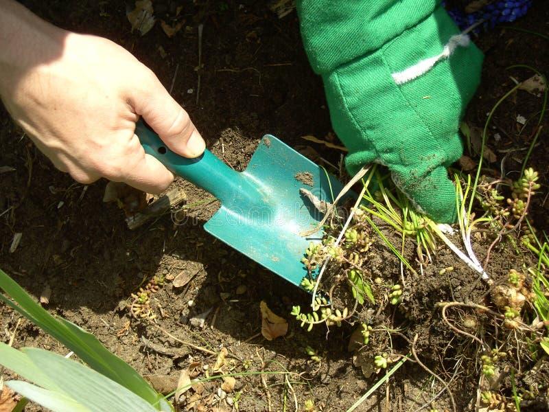 Het werk 03 van de tuin stock foto's