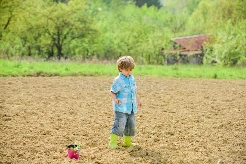 Het werk bij landbouwbedrijf Het concept van de moederaard Het planten van zaailingen Kind die pret met weinig schop en installat stock foto's