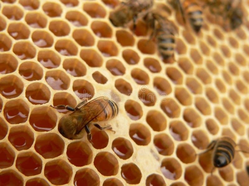 Het werk bijen
