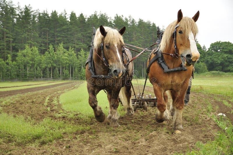 Het werk paard royalty-vrije stock afbeelding