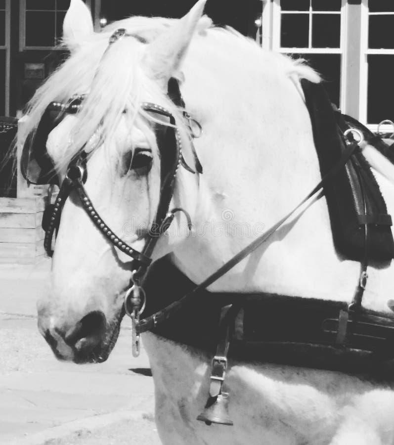 Het werk paard stock afbeelding