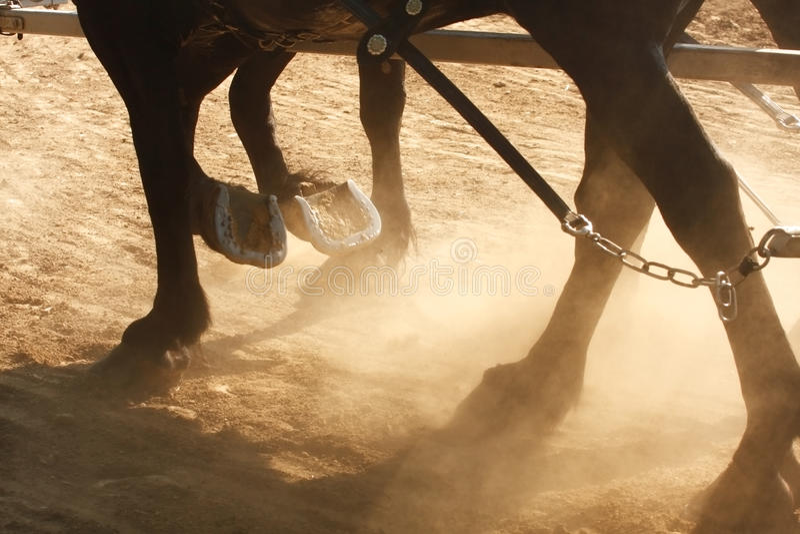 Het werk Paarden royalty-vrije stock foto's