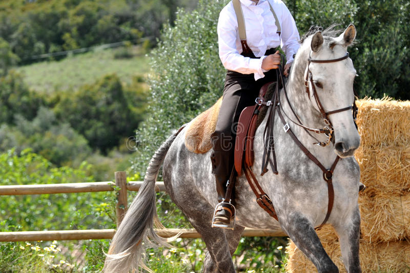 Het werk paardrijdenpaard royalty-vrije stock foto