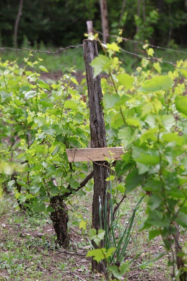 Het werkdetail van de wijngaardtraditie royalty-vrije stock afbeeldingen