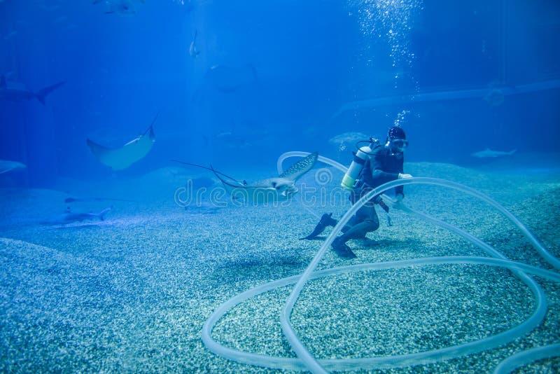 Het werken in het Aquarium stock afbeelding