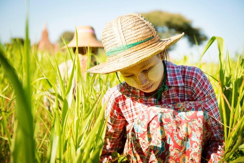 Het werken in landbouwbedrijf royalty-vrije stock foto