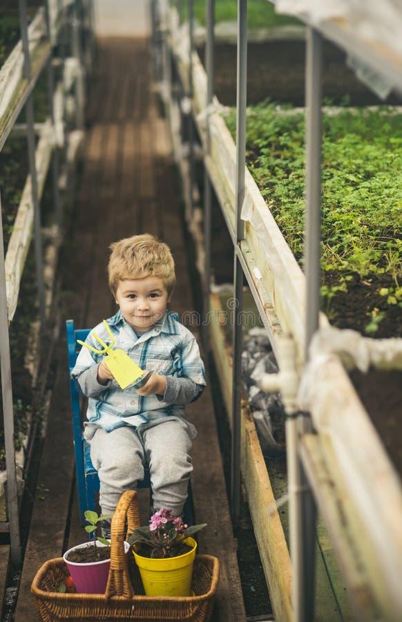 Het werken in serre kleine jongenslandbouwer die in serre werken het werken in serre is mijn hobby het toekomstige deskundige wer stock foto