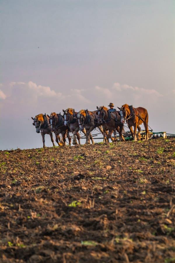 Het werken van het Gebied met Grote Paarden royalty-vrije stock foto's
