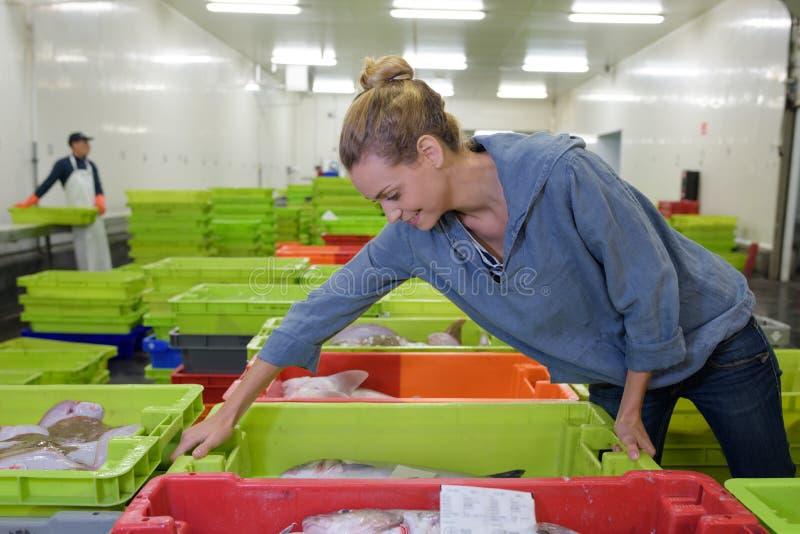 Het werken in vissenfabriek royalty-vrije stock foto