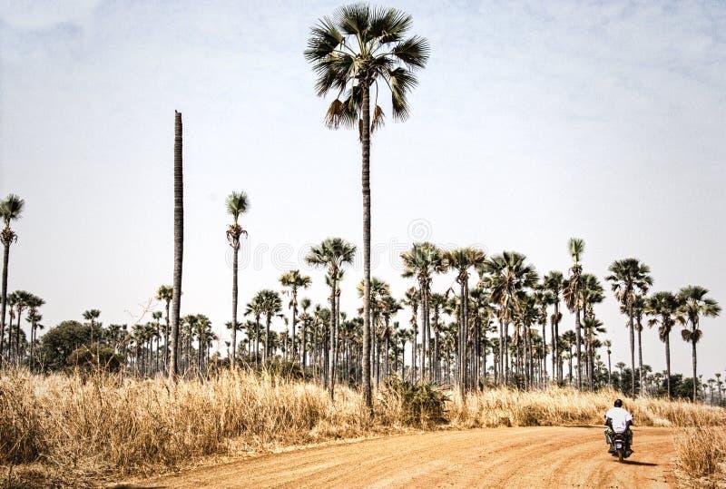 Het westen - Afrikaans landschap, Gambia stock foto's
