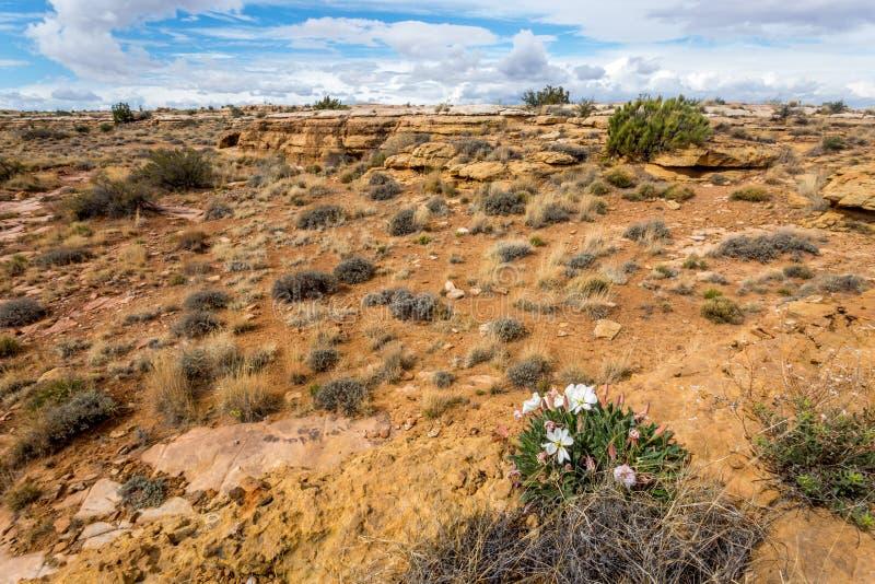 Het westen Duidelijke kreek Arizona in de lente royalty-vrije stock afbeeldingen