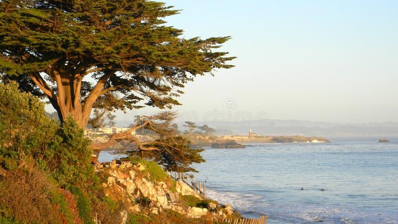 Het westenklip - kust met boom stock foto