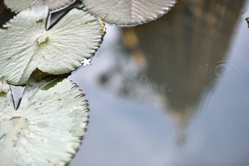Download Het Wijzen Op Van Gouden Pagode In De Lotusbloemvijver Stock Afbeelding - Afbeelding bestaande uit floating, meer: 107708875