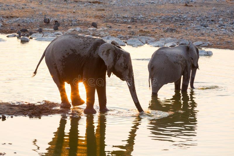 Download Het Wijzen Van Op Zonsondergang En Olifanten Bij Het Water Stock Foto - Afbeelding bestaande uit outdoors, olifanten: 54083688