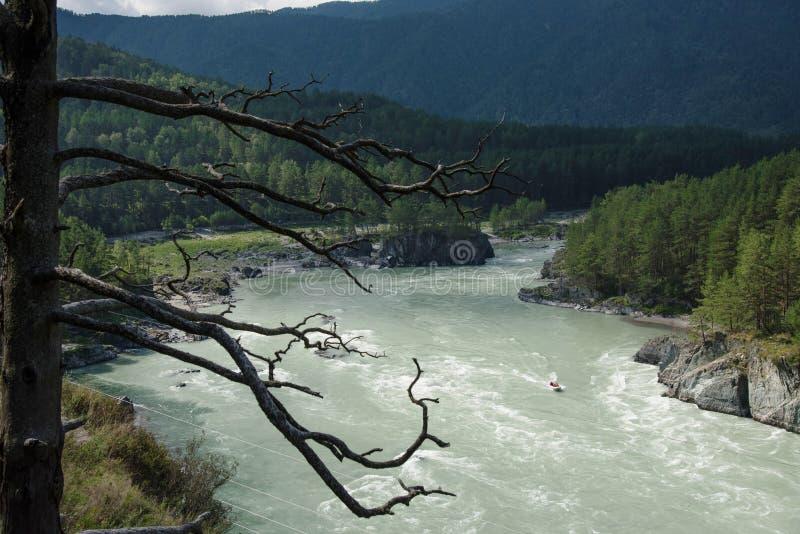 Het wild Altai Mooie Katun-rivier onder de bergen in de zomer stock afbeeldingen