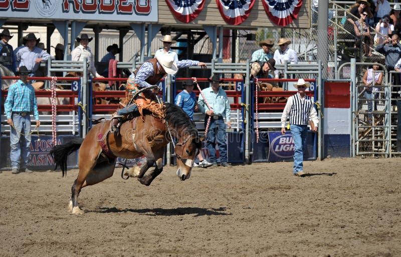 Het Wild paard en de cowboy van Bucking stock afbeelding