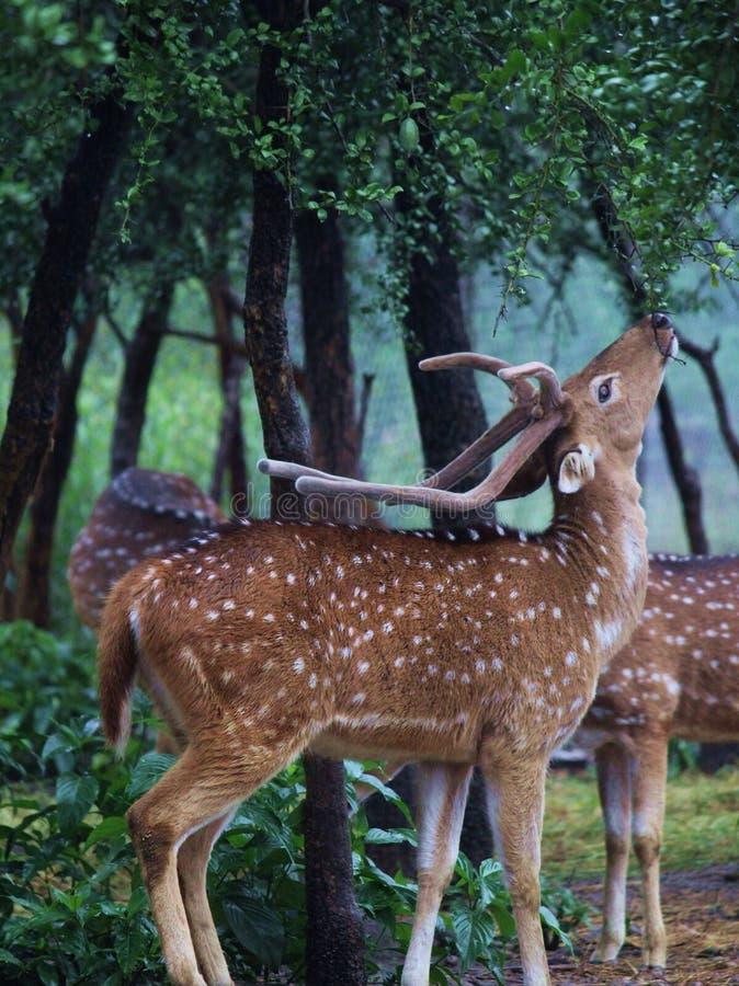 Het wild Photograhy royalty-vrije stock afbeeldingen