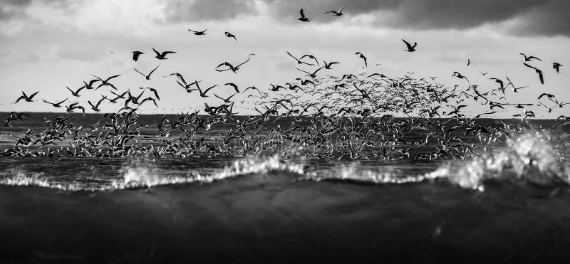 Het wild van vogels stock foto