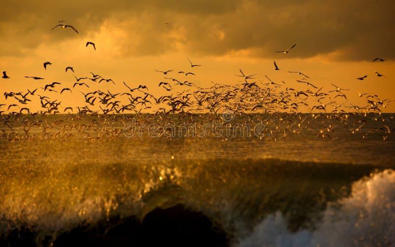 Het wild van vogels stock afbeelding