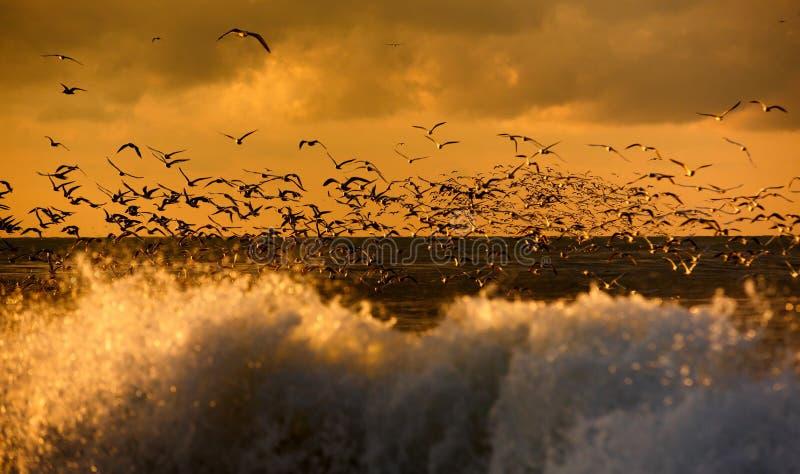Het wild van vogels stock foto's