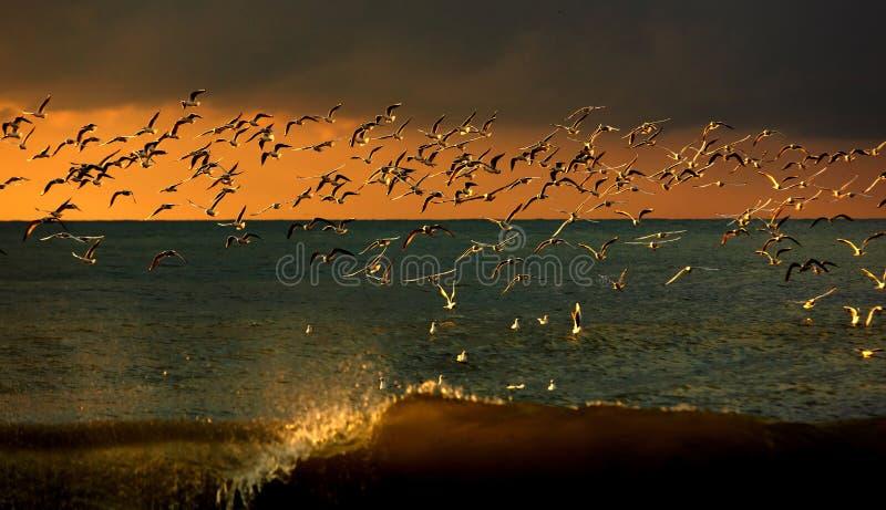 Het wild van vogels stock fotografie