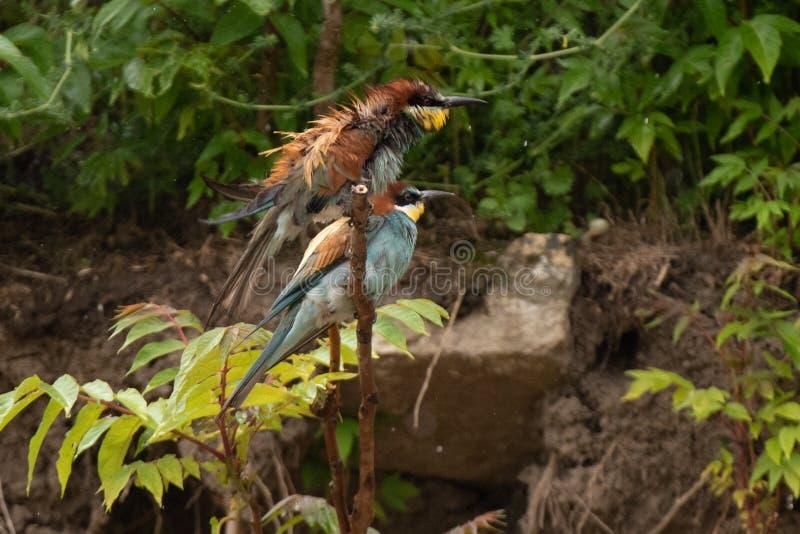 Het wild vogelwaarneming in de Delta van Donau, Roemeni? royalty-vrije stock afbeeldingen
