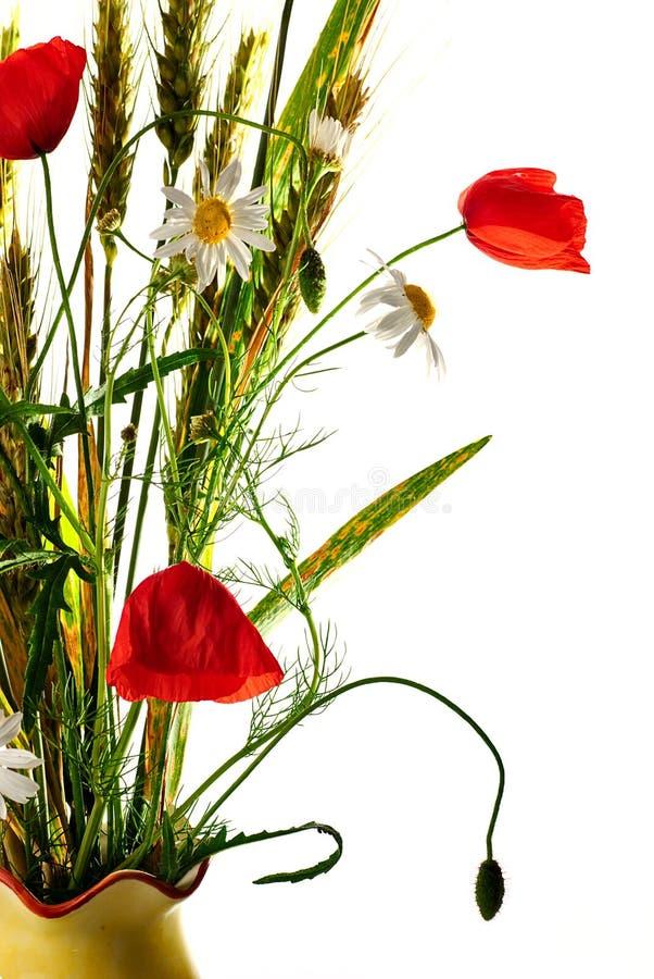 Het wilde boeket van de bloemenpapaver stock fotografie