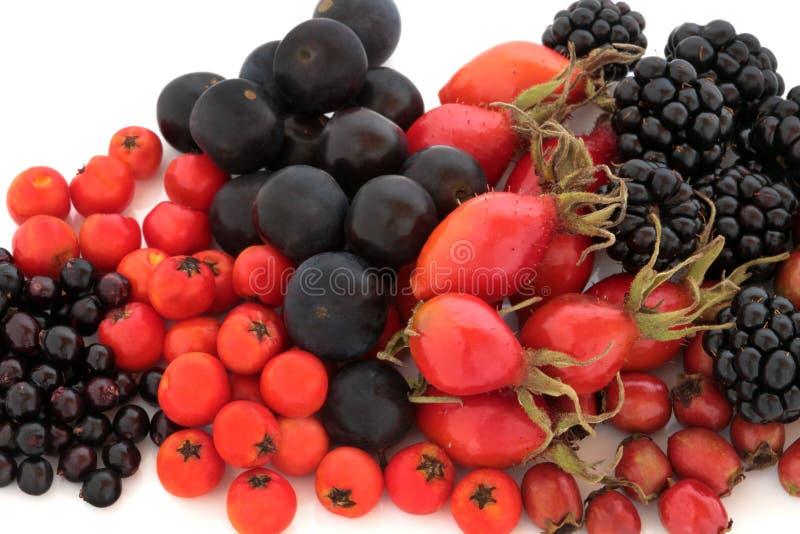 Het wilde Fruit van de Herfst royalty-vrije stock foto