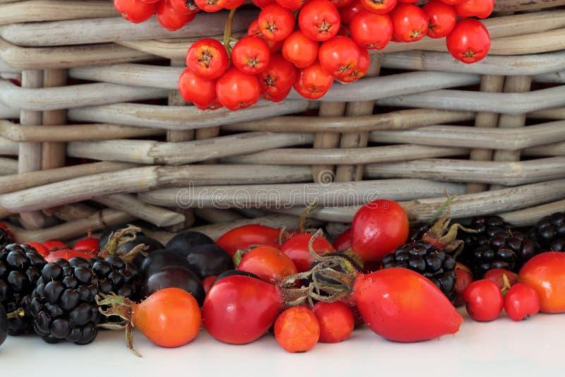 Het wilde Fruit van de Herfst royalty-vrije stock afbeelding