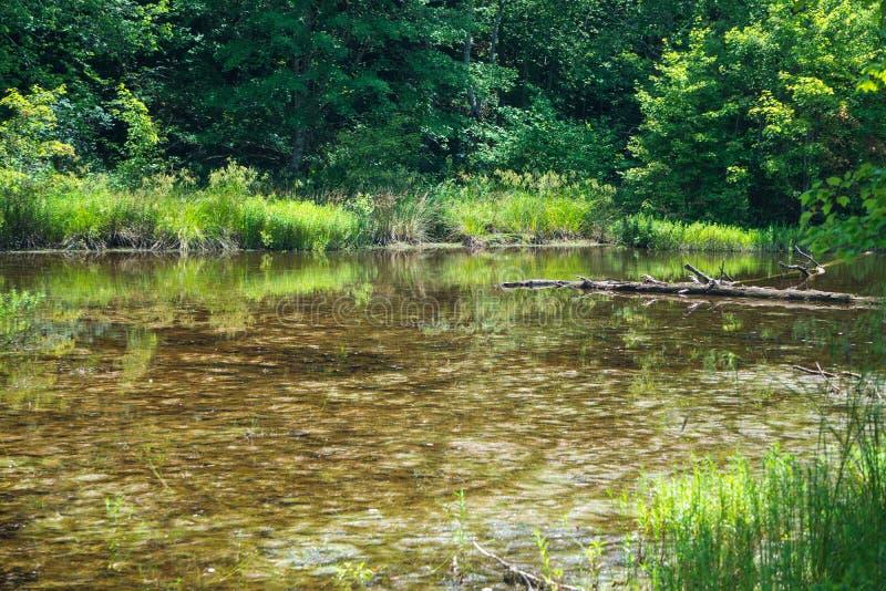 Het wildmoeras in Craig County, Virginia, de V.S. stock foto