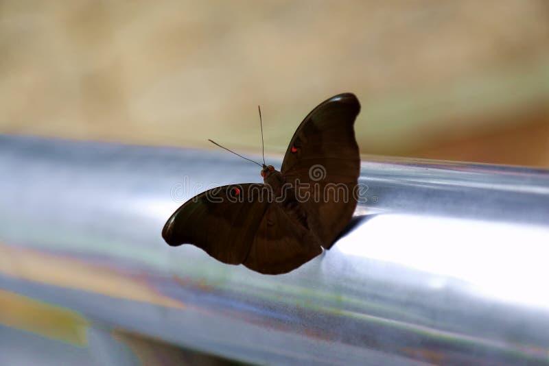 Het willekeurige schieten van vlinder royalty-vrije stock afbeeldingen