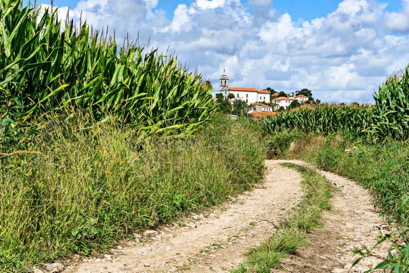 Het winden van rotsachtige weg in het midden van een cornfield rubriek voor het mooie dorp royalty-vrije stock fotografie